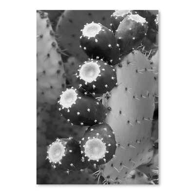 Americanflat 'Prickly Pear Tuna 5' by Murray Bolesta Photographic Print