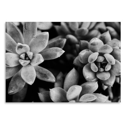 Americanflat 'Bw Succulents Up To' by Melinda Wood Photographic Print