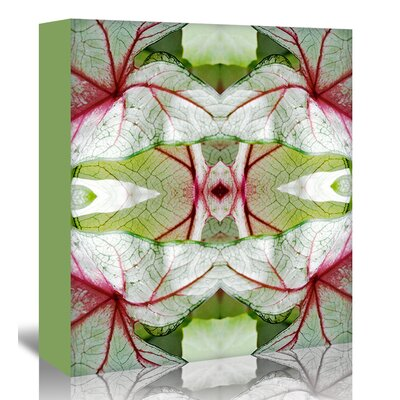 Americanflat 'Red Green Caladium' by Rose Anne Colavito Graphic Art Wrapped on Canvas