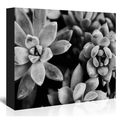 Americanflat Bw Succulents Up To' by Melinda Wood Photographic Print on Canvas