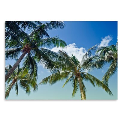 Americanflat Palm Trees' by Melanie Viola Photographic Print