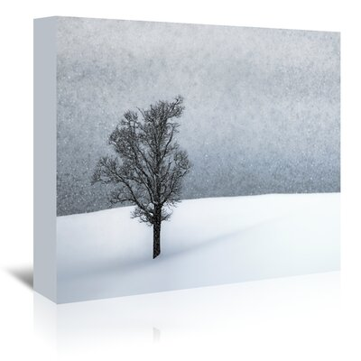 Americanflat 'Lonely Tree Idyllic Winter' by Melanie Viola Photographic Print Wrapped on Canvas