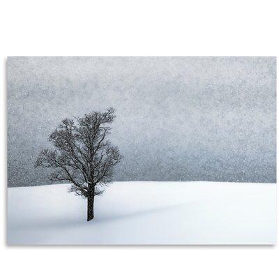 Americanflat 'Lonely Tree Idyllic Winter' by Melanie Viola Photographic Print