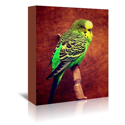 Americanflat Wonderful Dream Wonderful Budgie Bird Animal Photographic Print Wrapped on Canvas