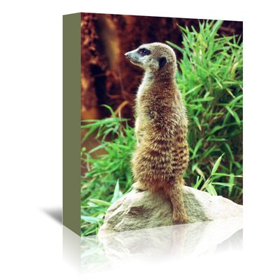 Americanflat Wonderful Dream Wildlife Meerkat Mammal Photographic Print Wrapped on Canvas
