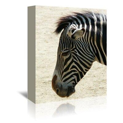 Americanflat Wonderful Dream Zebra Africa Wildlife Photographic Print Wrapped on Canvas