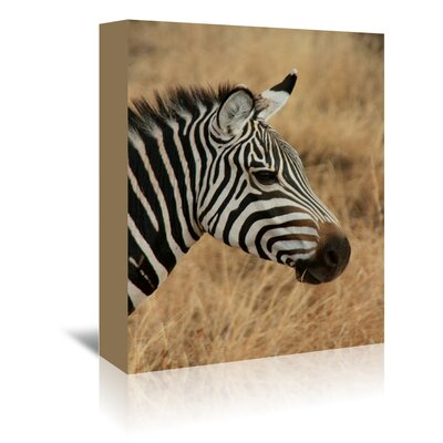 Americanflat Wonderful Dream Zebra Savanna Africa Photographic Print Wrapped on Canvas