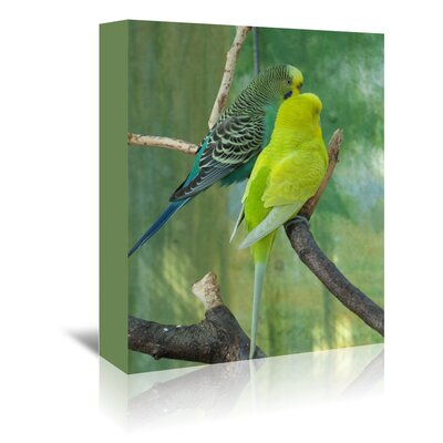 Americanflat Wonderful Dream Wildlife Budgie Photographic Print Wrapped on Canvas