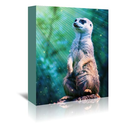 Americanflat Wonderful Dream Wildlife Meerkat with Stars Photographic Print Wrapped on Canvas