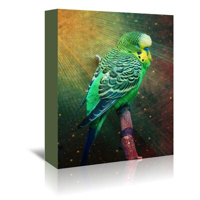 Americanflat Wonderful Dream Wonderful Budgie Bird with Stars Photographic Print Wrapped on Canvas