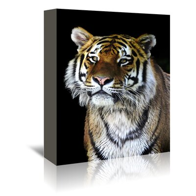 Americanflat Wonderful Dream Wildlife Tiger Photographic Print Wrapped on Canvas