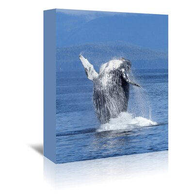 Americanflat Wonderful Dream Whale Fish Sea Life Ocean Photographic Print Wrapped on Canvas
