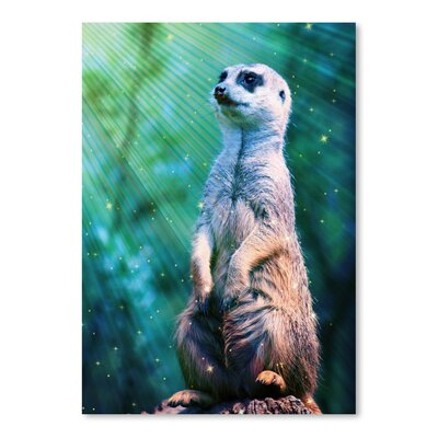Americanflat Wonderful Dream Wildlife Meerkat with Stars Photographic Print