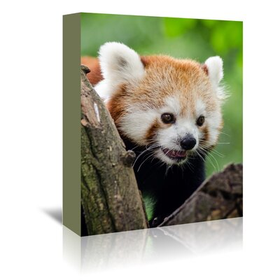 Americanflat Wonderful Dream Panda Bear Animal Photographic Print Wrapped on Canvas