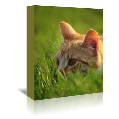 Americanflat Wonderful Dream Red Cute Cat in the Nature Photographic Print Wrapped on Canvas
