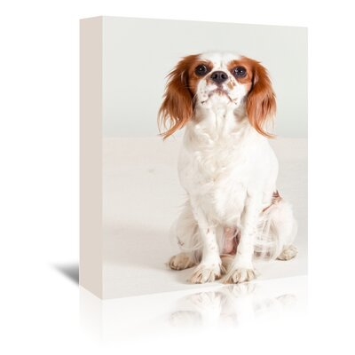 Americanflat Wonderful Dream Portrait Dog Photographic Print Wrapped on Canvas
