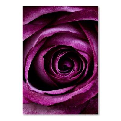 Americanflat Wonderful Dream Rose of Love Valentine Photographic Print