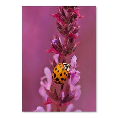 Americanflat Wonderful Dream Flower with Ladybug Photographic Print