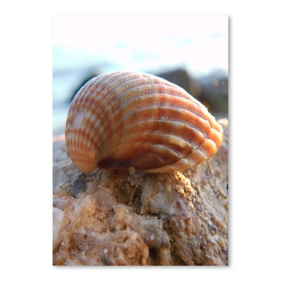 Americanflat Wonderful Dream Sea Shell Style Photographic Print
