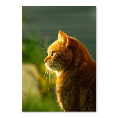 Americanflat Wonderful Dream Cat with Sun Photographic Print