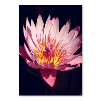Americanflat Wonderful Dream Asia Lotus Flower 3 Photographic Print