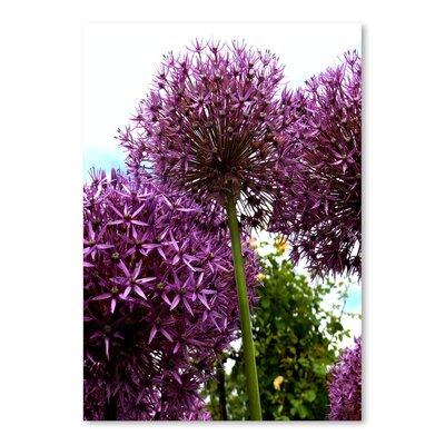 Americanflat Wonderful Dream Alliums Flower 2 Photographic Print