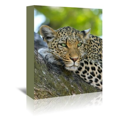 Americanflat Wonderful Dream Leopard Gepard Animal Cat Photographic Print Wrapped on Canvas
