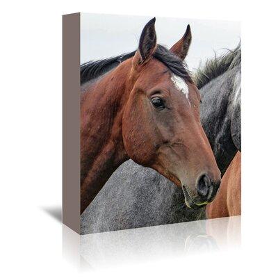Americanflat Wonderful Dream Horses Animal Farm Wildlife Photographic Print Wrapped on Canvas