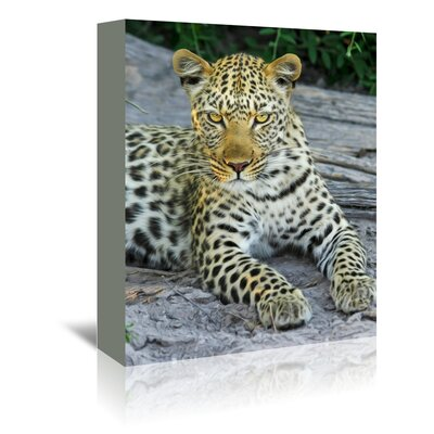 Americanflat Wonderful Dream Leopard Animal Wildcat Photographic Print Wrapped on Canvas