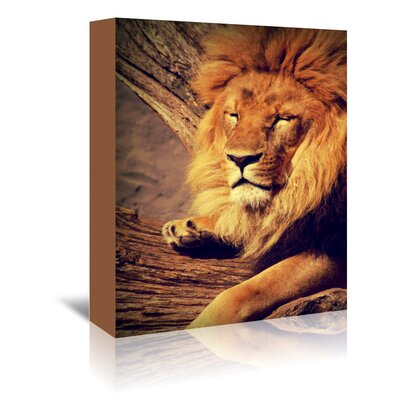 Americanflat Wonderful Dream Lion Wildlife Cat Animal Africa Photographic Print Wrapped on Canvas