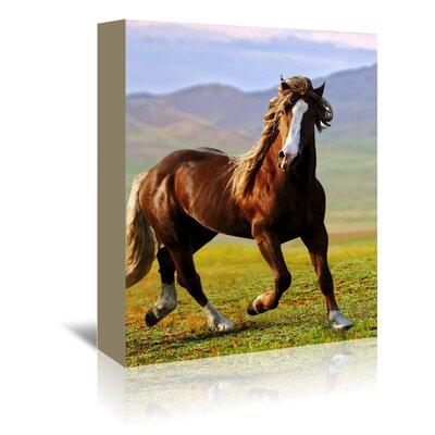 Americanflat Wonderful Dream Horse Wildlife Farm Animal Photographic Print Wrapped on Canvas