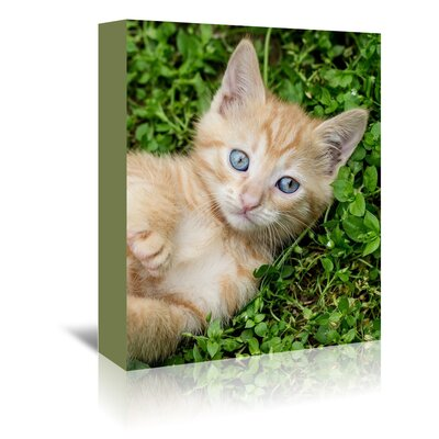 Americanflat Wonderful Dream Kitten Pet Cat Animal Photographic Print Wrapped on Canvas