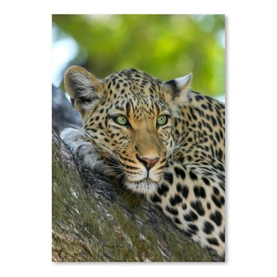 Americanflat Wonderful Dream Leopard Gepard Animal Cat Photographic Print