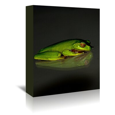 Americanflat Wonderful Dream Reptile Frog Photographic Print Wrapped on Canvas