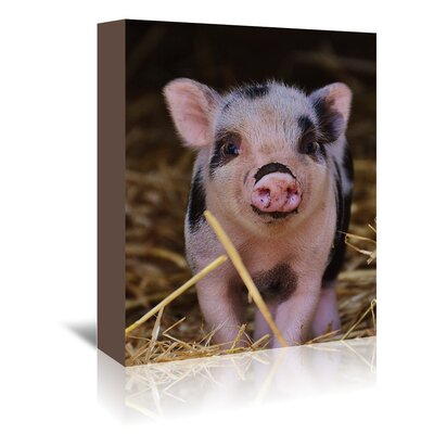 Americanflat Wonderful Dream Farm Pig Photographic Print Wrapped on Canvas