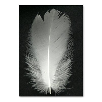 Americanflat Wonderful Dream Feather Bird Silver Photographic Print