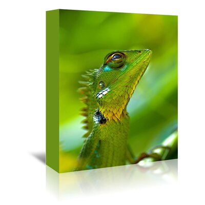 Americanflat Wonderful Dream Exotic Tropical Reptile Animal Photographic Print Wrapped on Canvas