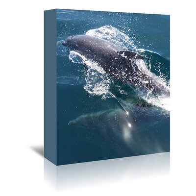 Americanflat Wonderful Dream Dolphin Sea Life Underwater Photographic Print Wrapped on Canvas