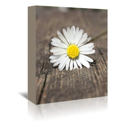 Americanflat Wonderful Dream Daisy Flower on the Floor Photographic Print Wrapped on Canvas