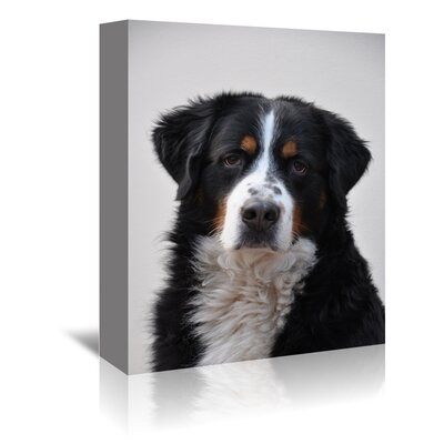 Americanflat Wonderful Dream Cute Dog Photographic Print Wrapped on Canvas