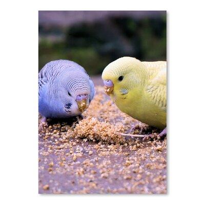 Americanflat Wonderful Dream Eating Budgie Bird Wildlife Photographic Print
