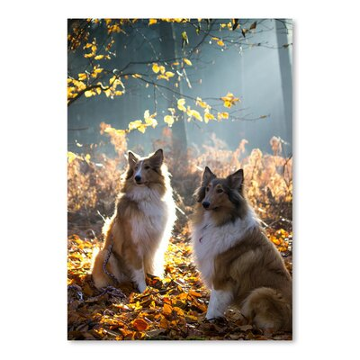 Americanflat Wonderful Dream Collie Dog Pet Animal Photographic Print