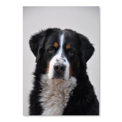 Americanflat Wonderful Dream Cute Dog Pet Animal Photographic Print