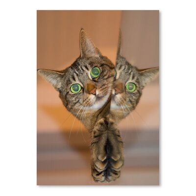 Americanflat Wonderful Dream Cute and Sweet Cat Photographic Print