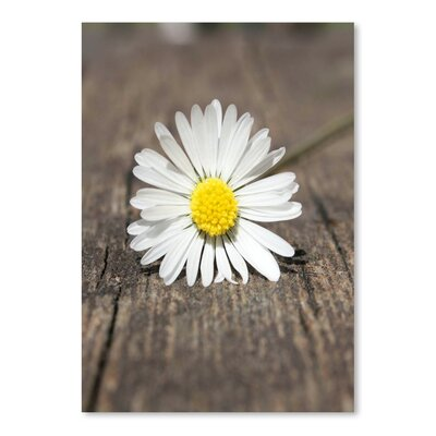 Americanflat Wonderful Dream Daisy Flower on the Floor Photographic Print