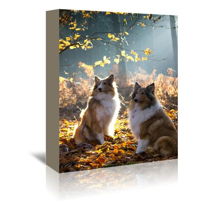 Americanflat Wonderful Dream Collie Dog Pet Animal Photographic Print Wrapped on Canvas