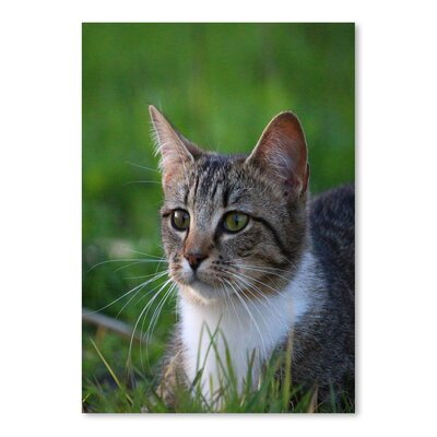 Americanflat Wonderful Dream Cat in the Nature Animal Photographic Print