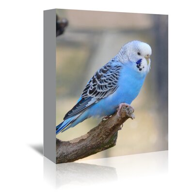 Americanflat Wonderful Dream Blue Budgie Bird Parrot Photographic Print Wrapped on Canvas