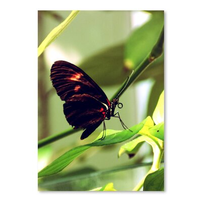 Americanflat Wonderful Dream Butterfly Insect Photographic Print