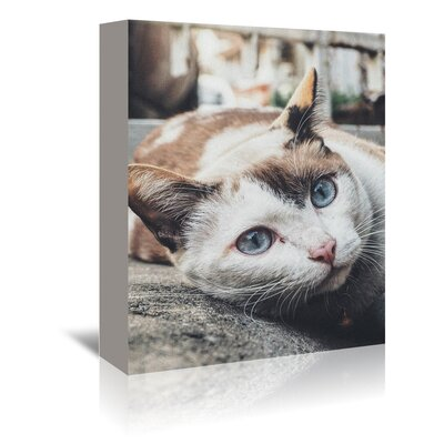 Americanflat Wonderful Dream Antique Colours of Cat Photographic Print Wrapped on Canvas